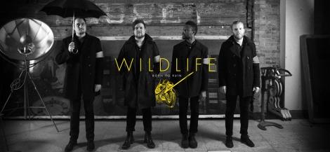 Wildlife-band1